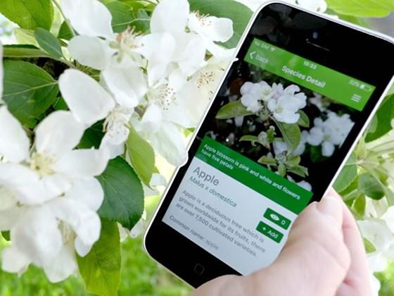 tree-id-app
